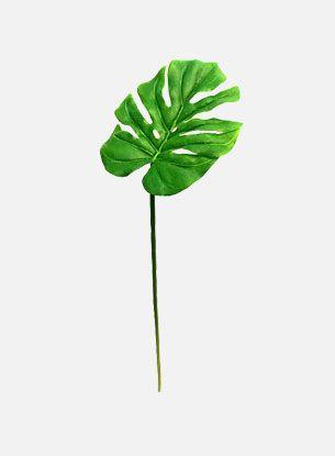 Monstera blad - grønn